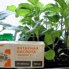 Янтарная кислота для растений. Как применять для полива и подкормки