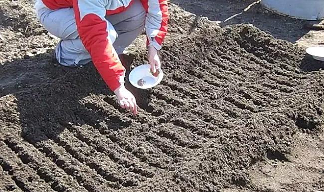 семена в землю