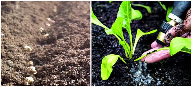 закладка семян в землю
