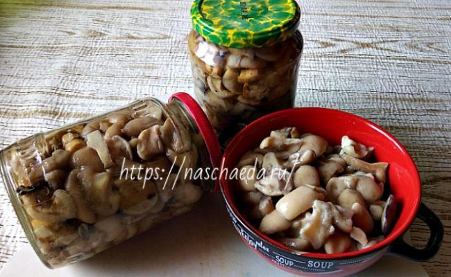 Маринованные маслята на зиму - самые простые рецепты вкусного приготовления